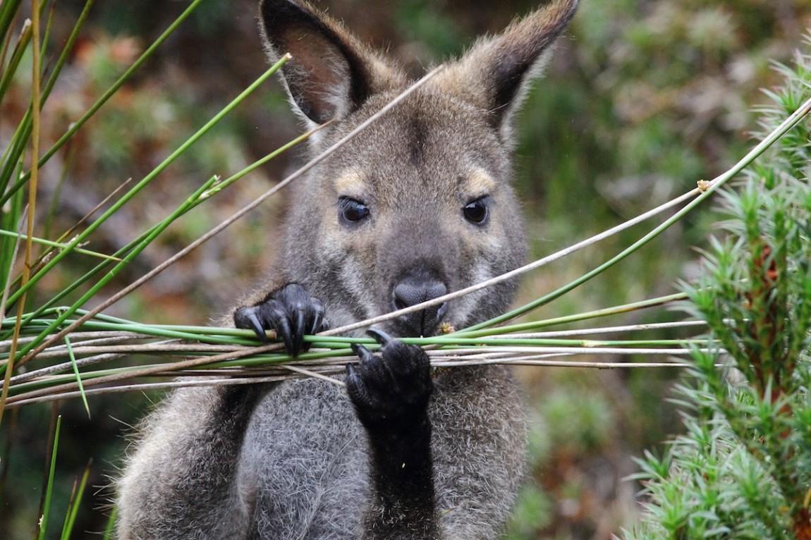 australia04